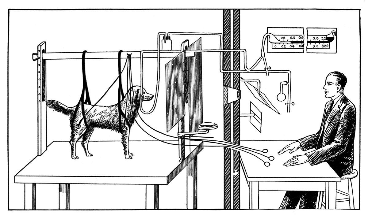 Pavlov-experiments