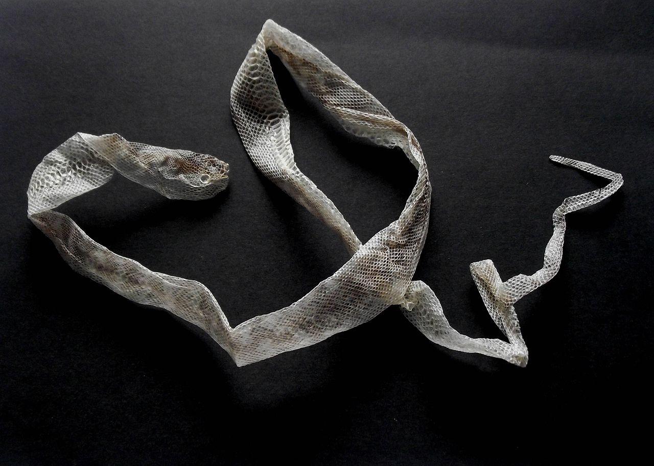 snakeskin-1